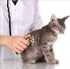 Ветеринарные клиники в Кильдинстрое